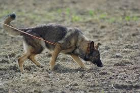 FLKC Tracking Dog Tests – October 23, 2016