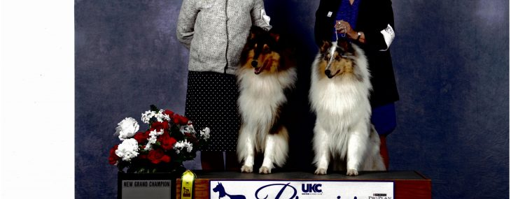Finger Lakes Kennel Club, Inc  — Sponsoring Events For Dog